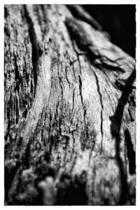 Tree_Trunk_6