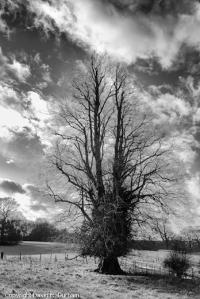 TreesSilouhette_Web_4